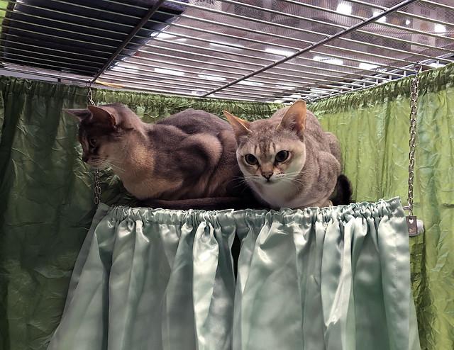 roryzakSpeedcat1851