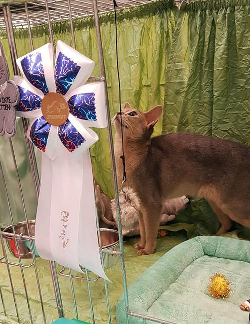 roryBIVspeedcat2