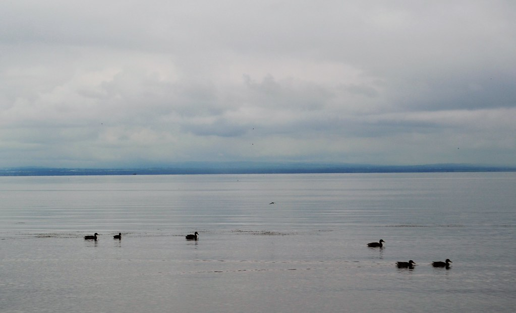 Lough Neagh sore at Ballyronan