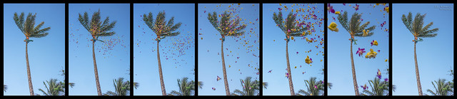 Shower of Flowers at Paradise Cove Luau Collage - Kapolei, Oahu, Hawaii