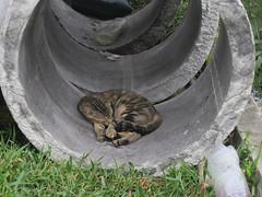 20100725-在水筆仔公園的可愛貓 拷貝