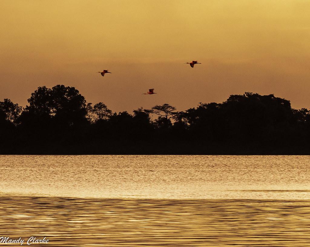 Demerara River - Guyana