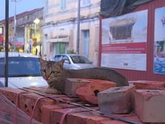 20190728-清真寺裡的貓