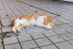 20190728-cat 拷貝