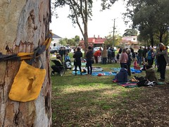 Save this tree - Teddy Bears Picnic to #SaveGandolfoGardens IMG_1541