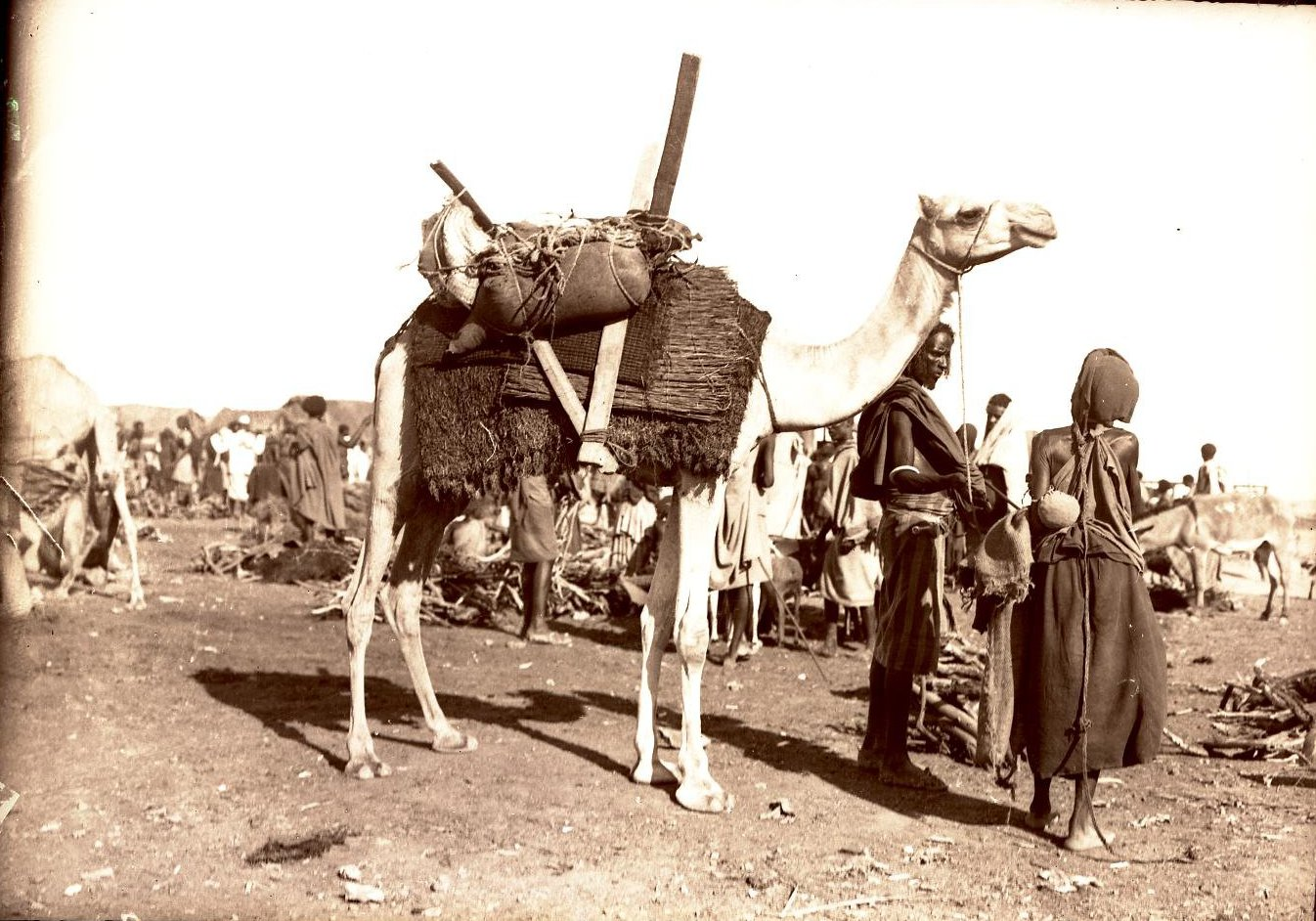 99. Джибути. Сомалийский верблюд