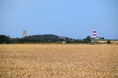 Happisburgh across the barley