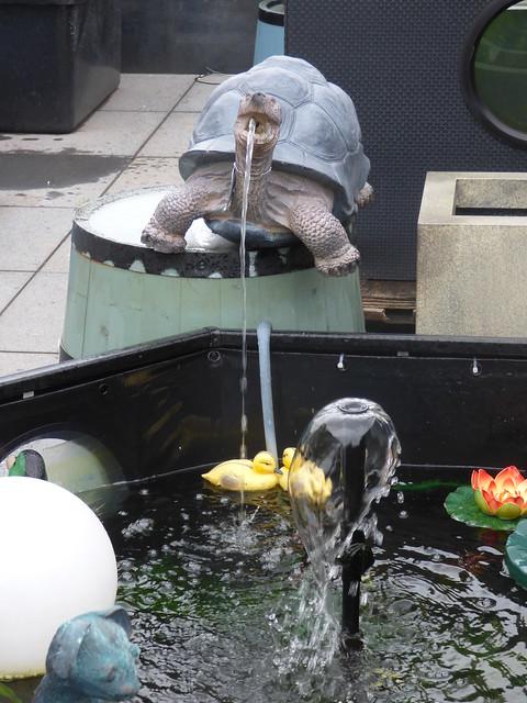 Shirley Aquatics at Beckett's Farm - turtle fountain