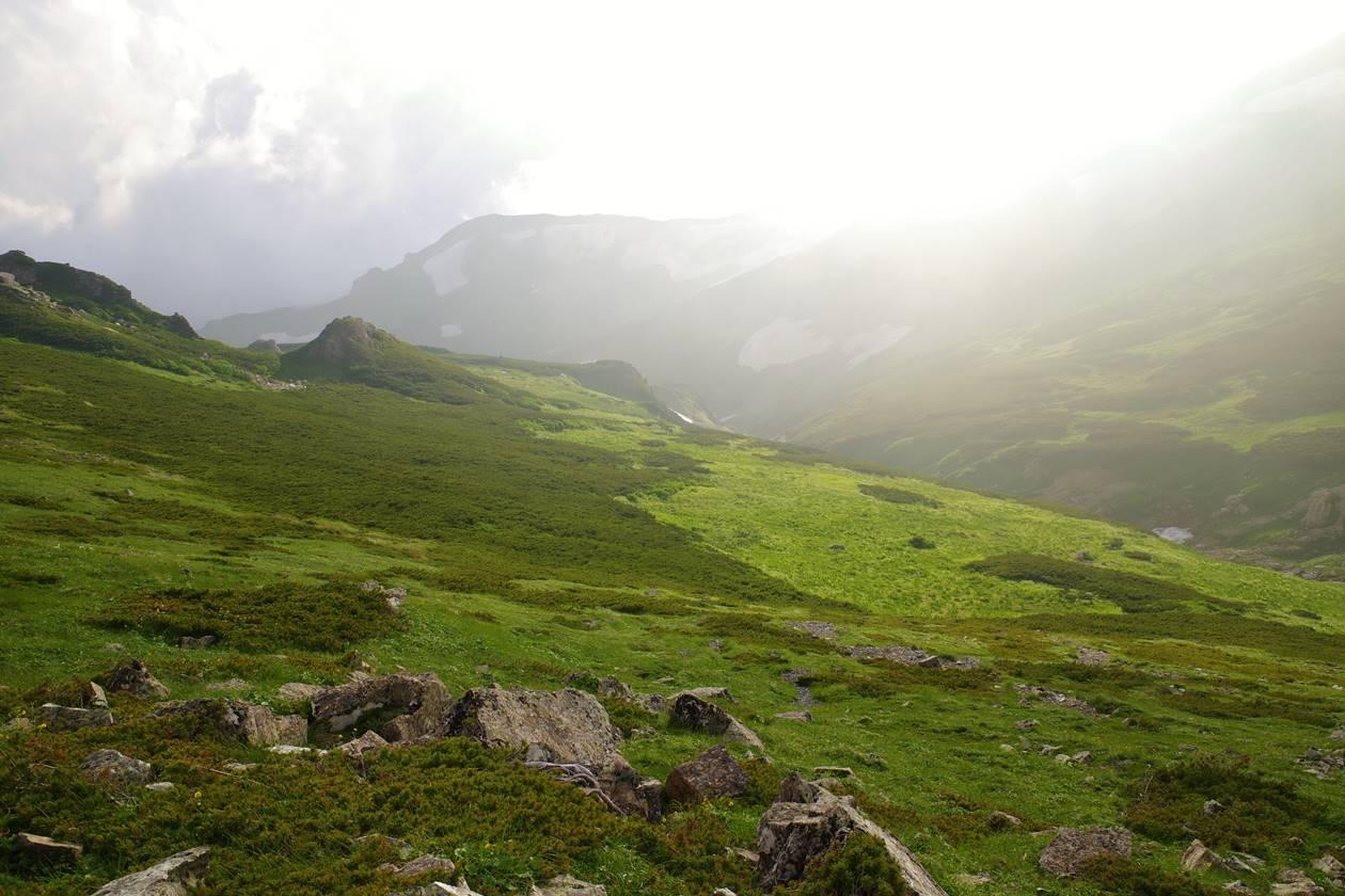 白馬岳の湿原