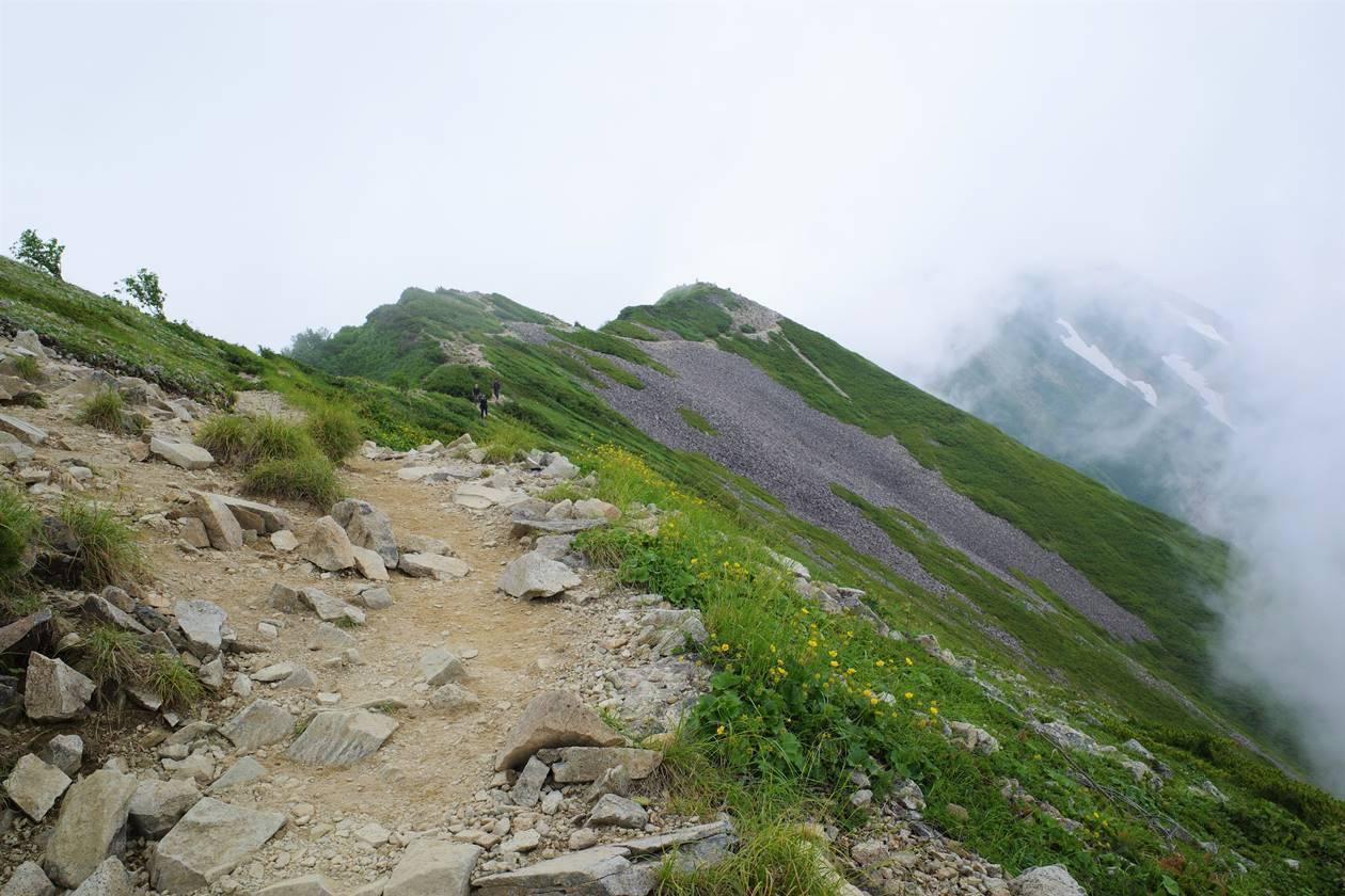 白馬岳 花の稜線