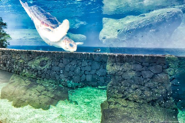 Un centre de soins pour tortues marines a ouvert ses portes à Monaco - 1L8A9453