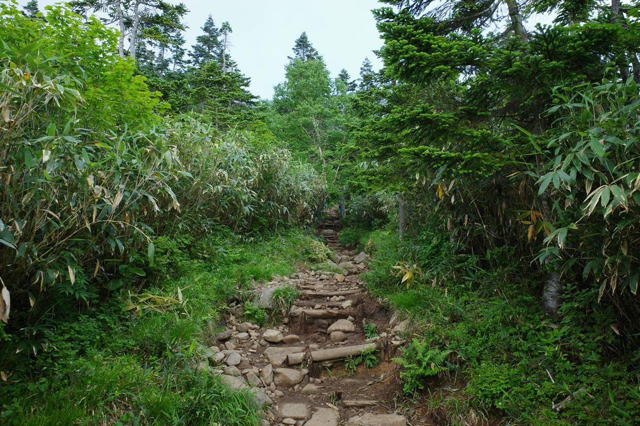 白馬岳 栂池ルート登山道