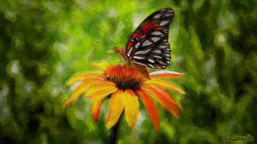 Soulis: A Monarch on a Rudbeckia