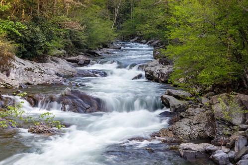 greatsmokeymountainsnationalpark nationalparks smokeymountains gatlinburg tennessee unitedstatesofamerica river rivers littleriver outdoors landscapes thesinks spring springtime ngc ngs