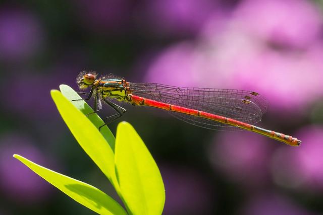 Colors in the garden - Farben im Garten (Uli)