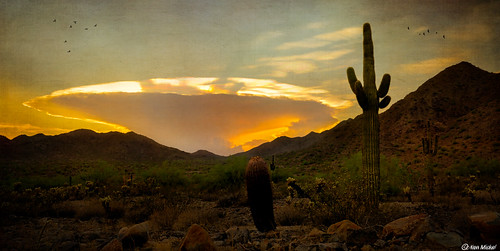 arizona beautiful buckeye cacti cactus clouds cloudscape cloudy desert kenmickelphotography landscape outdoors plants saguaro skylineregionalpark sunsets texture textured textures nature photography sunset unitedstatesofamerica