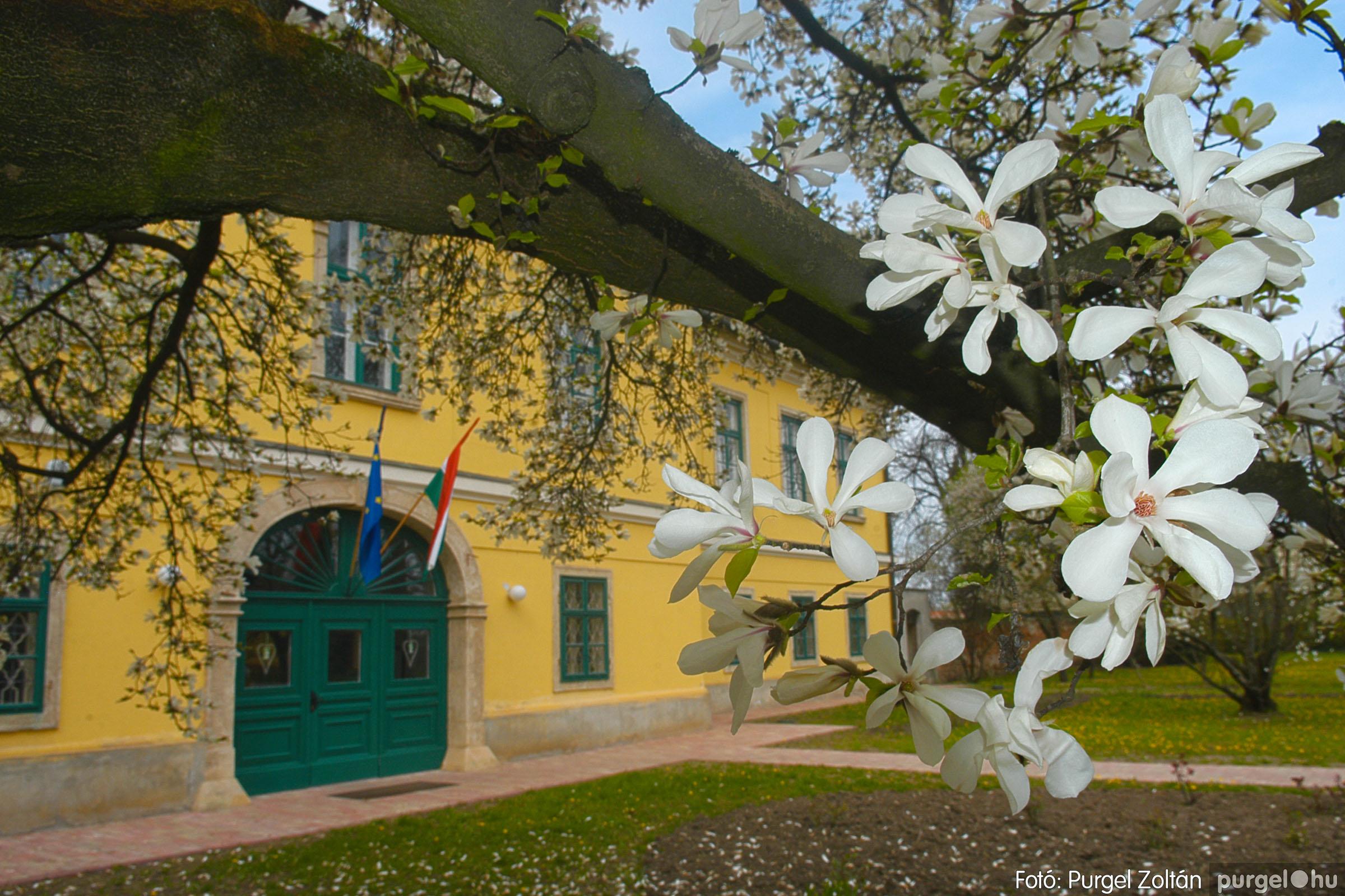 2016.04.01. 009 A kastély virágzó liliomfája - Fotó:PURGEL ZOLTÁN© DSC_0303q.jpg