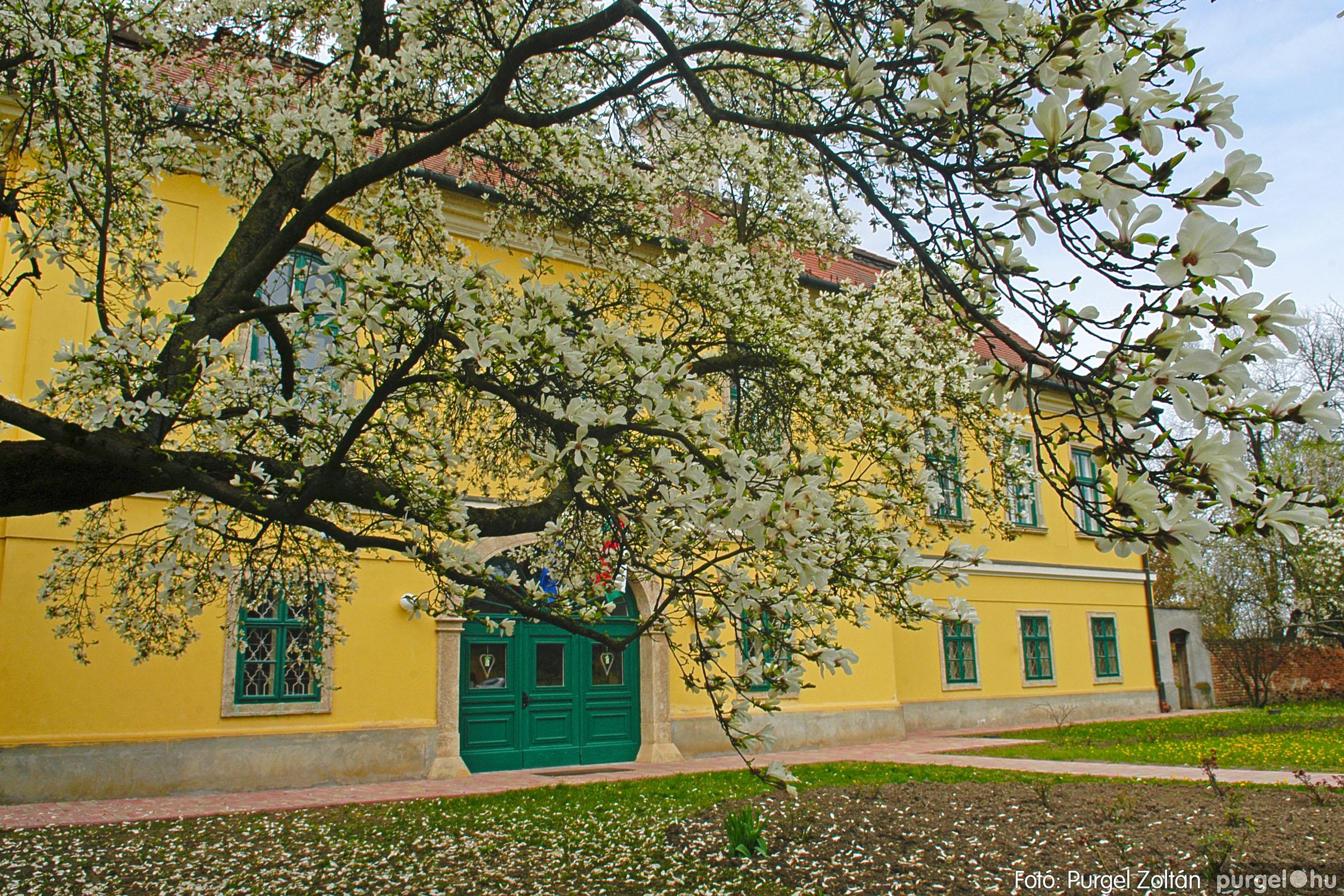 2016.04.01. 007 A kastély virágzó liliomfája - Fotó:PURGEL ZOLTÁN© DSC_0301q.jpg