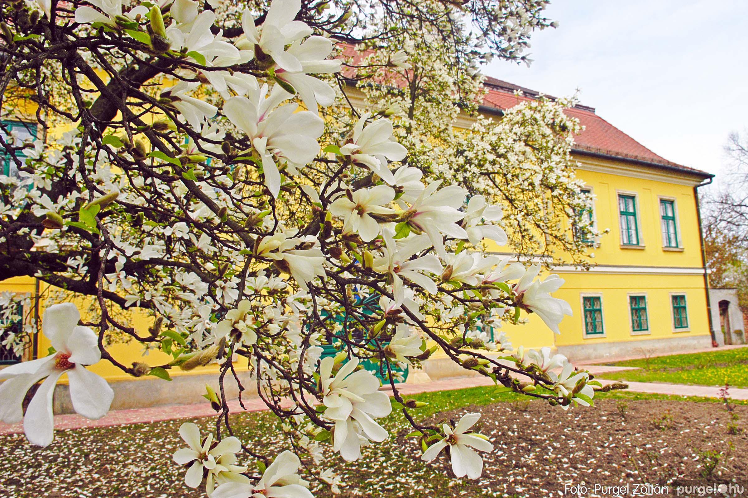 2016.04.01. 001 A kastély virágzó liliomfája - Fotó:PURGEL ZOLTÁN© DSC_0290q.jpg