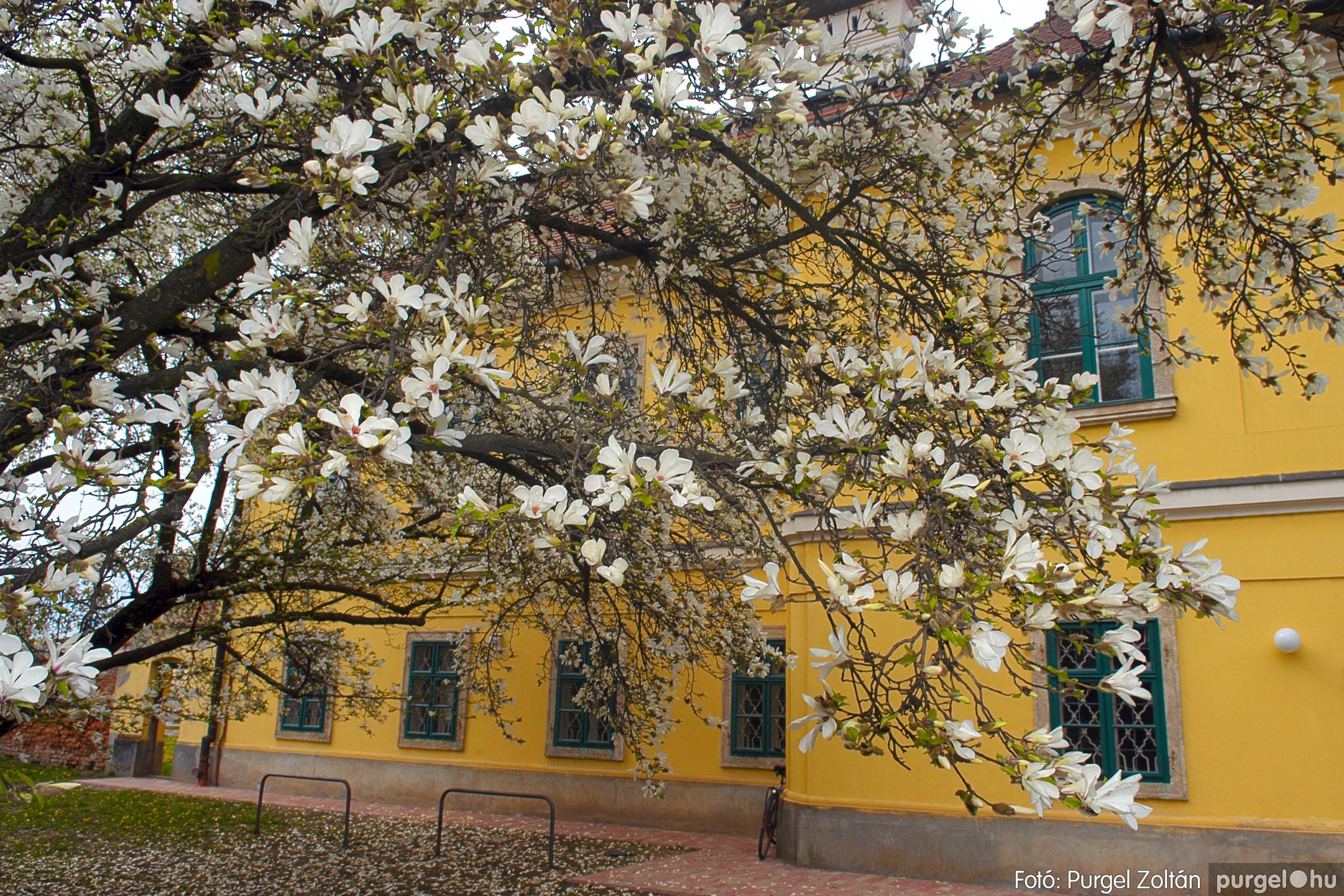 2016.04.01. 012 A kastély virágzó liliomfája - Fotó:PURGEL ZOLTÁN© DSC_0306q.jpg