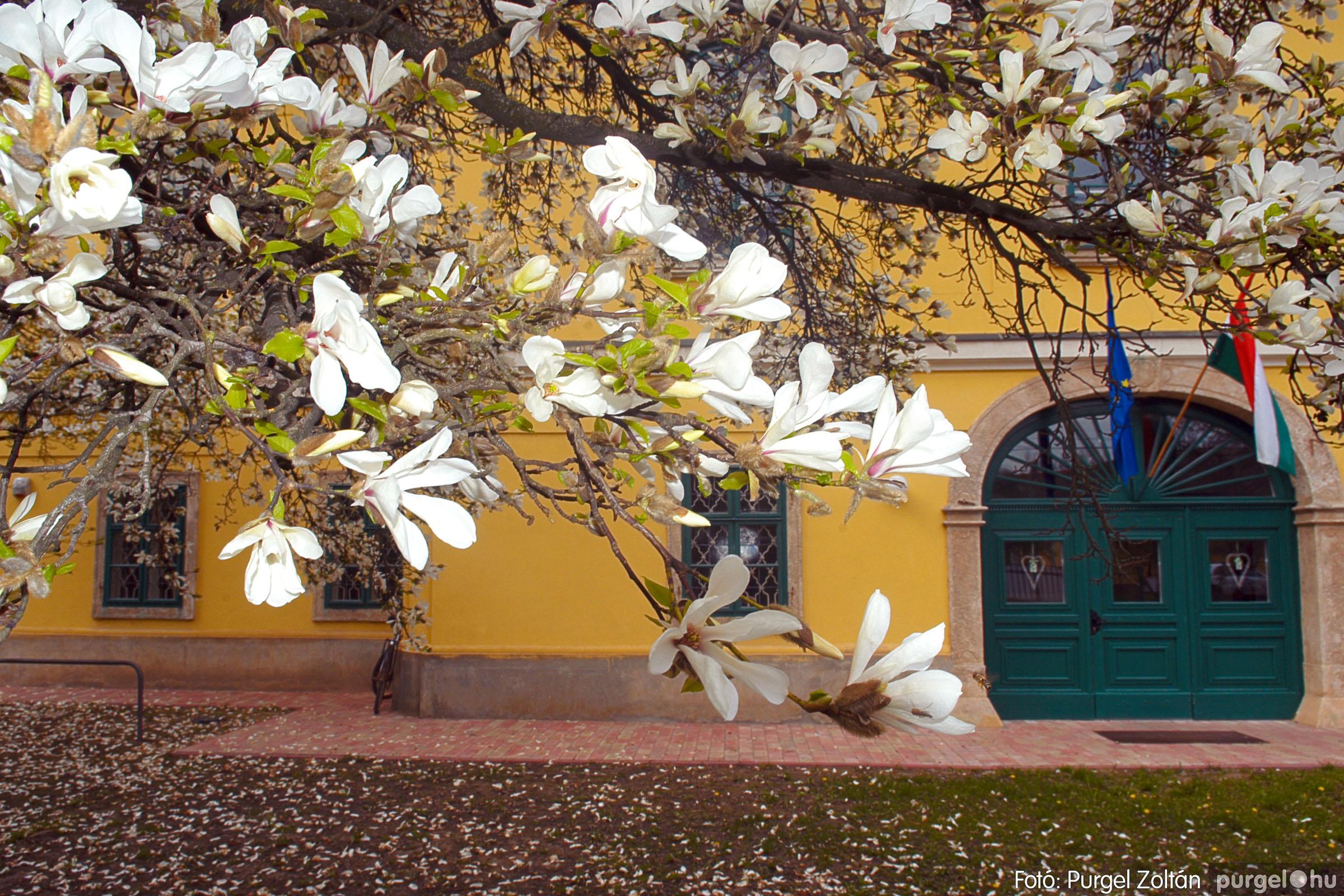 2016.04.01. 011 A kastély virágzó liliomfája - Fotó:PURGEL ZOLTÁN© DSC_0305q.jpg