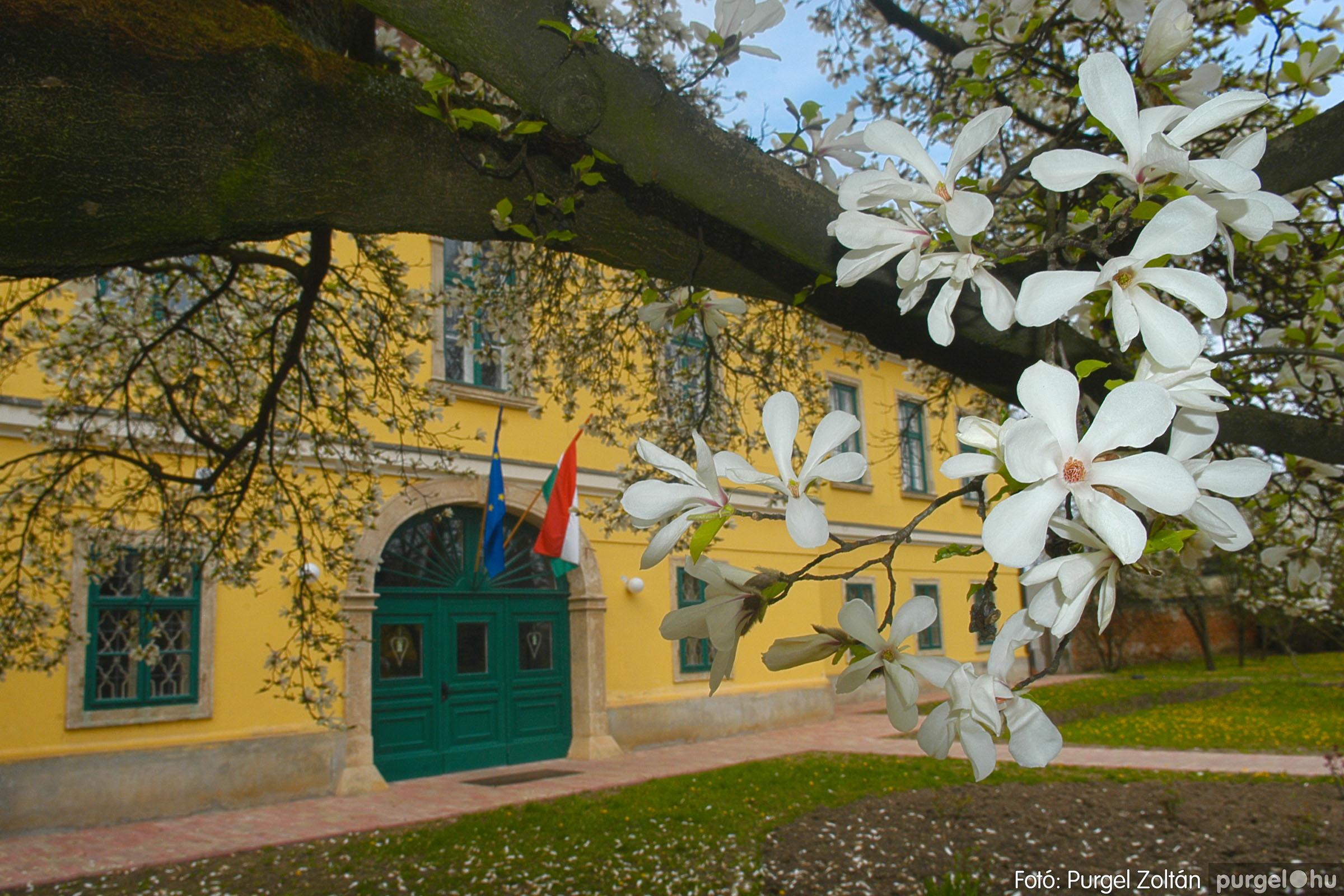 2016.04.01. 010 A kastély virágzó liliomfája - Fotó:PURGEL ZOLTÁN© DSC_0304q.jpg