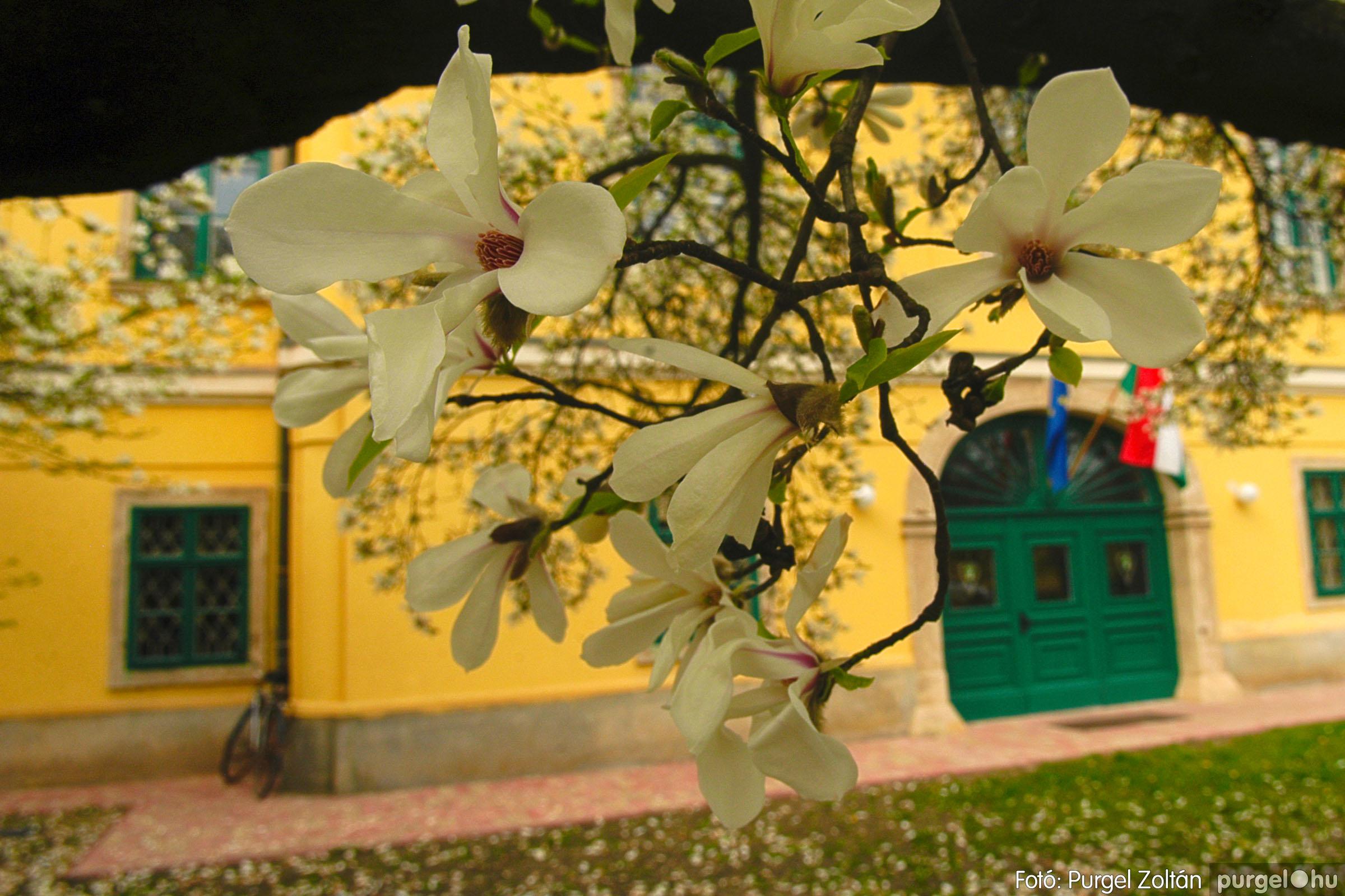 2016.04.01. 008 A kastély virágzó liliomfája - Fotó:PURGEL ZOLTÁN© DSC_0302q.jpg