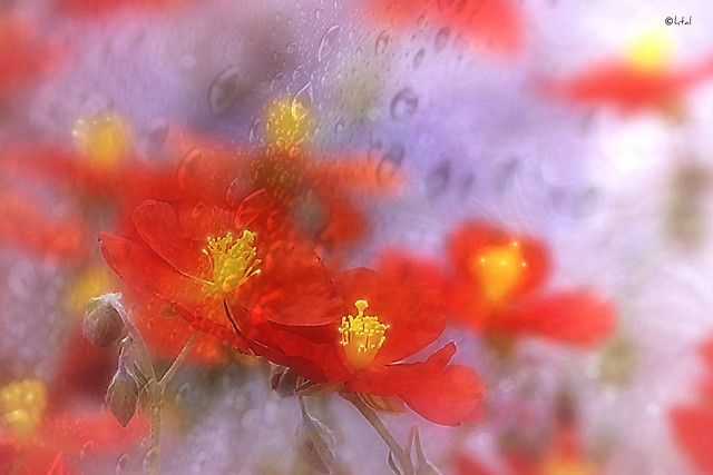 Red. A Slider :-)