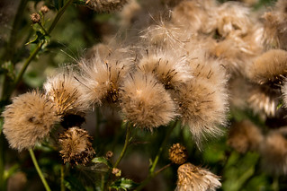 Weeds Can Be Beautiful