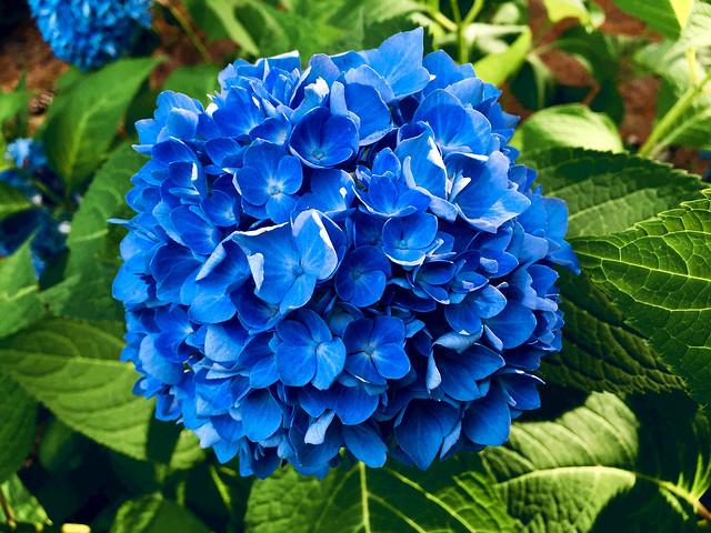 A World of Beautiful Blue