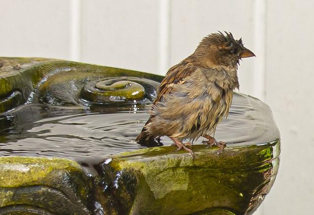 A Refreshing Bath