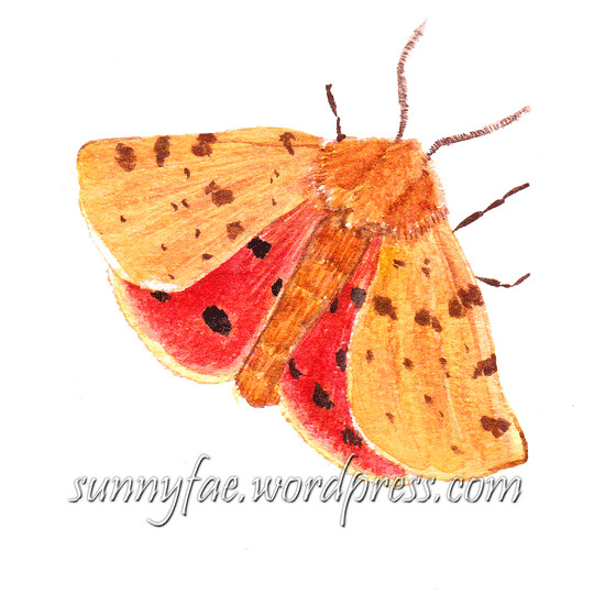 tiger moth watercolour painting