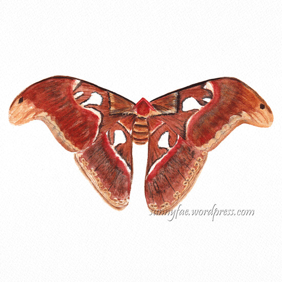 giant atlas moth watercolour painting