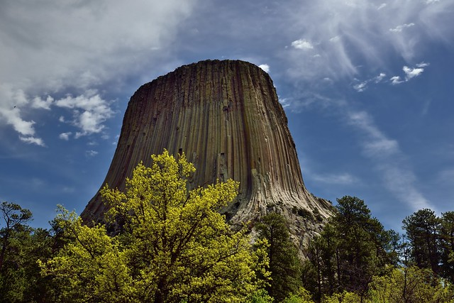 A Forest of Greens and Yellows with Blue Skies for a View to Devils Tower (Bear Lodge, Devils Lodge National Monument)
