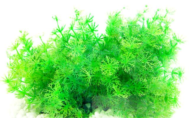 640x400 Vivaria Plastic Plants