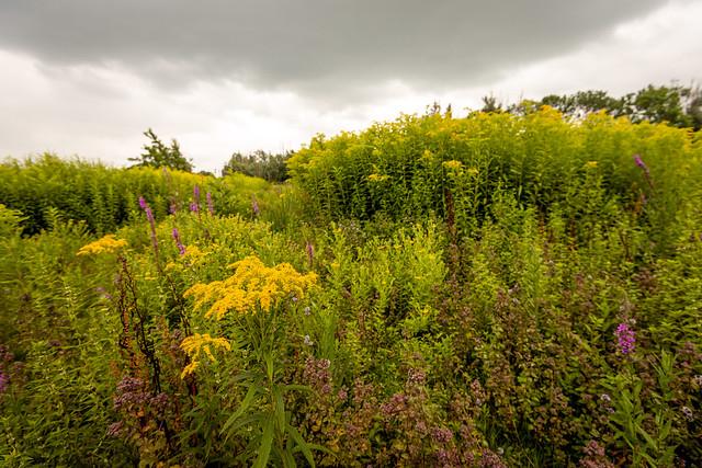 Biodiversity in a Dutch nature reserve