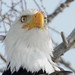 DSCN2325 eagle eye