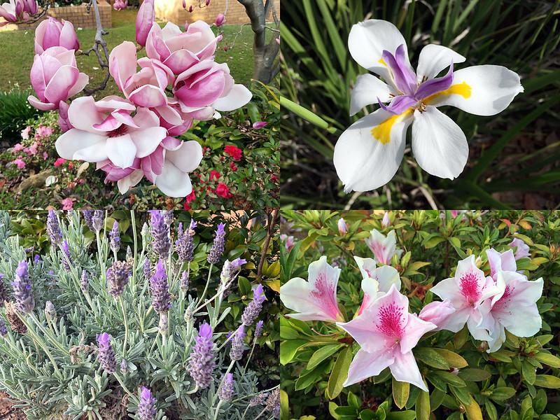Spring flowers in winter