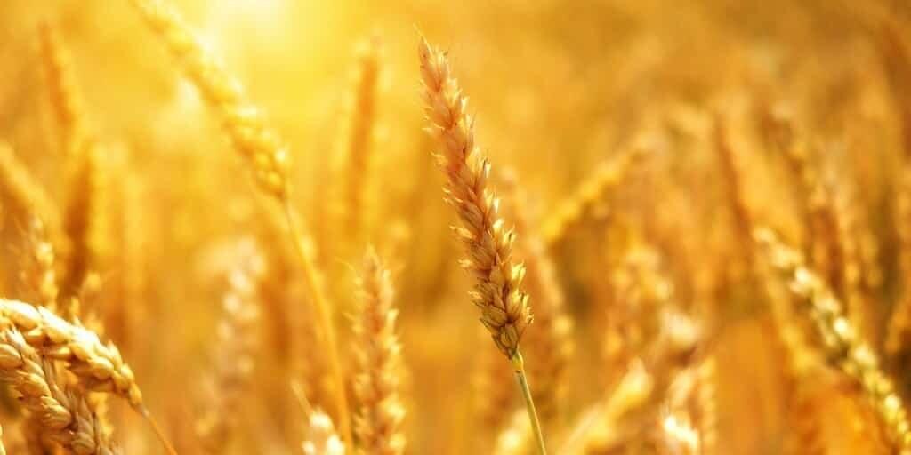 fertilisants-naturels-moins-énergivores