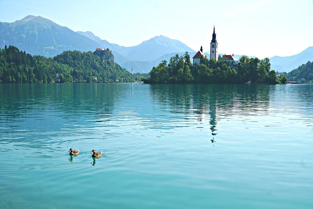 Sorsia Bled-järvellä