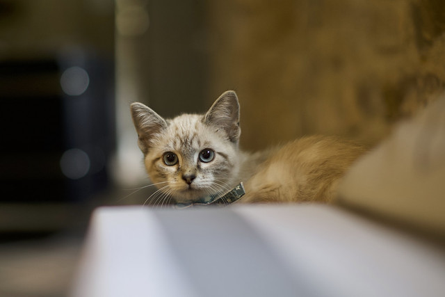 Surprise la chatte