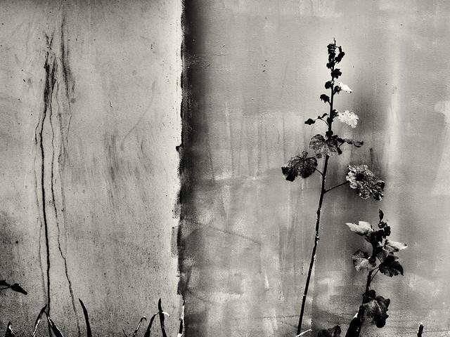 dark flowers abstract