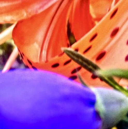 macromondays complementarycolor blue orange