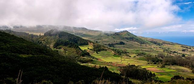 Meadows / Prados