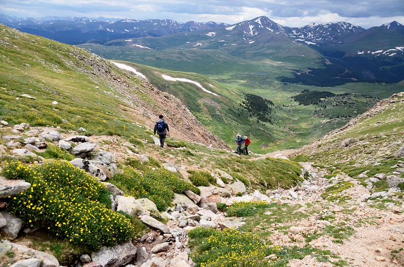 Tundra flowers along the trail up to Mount Evans (34)