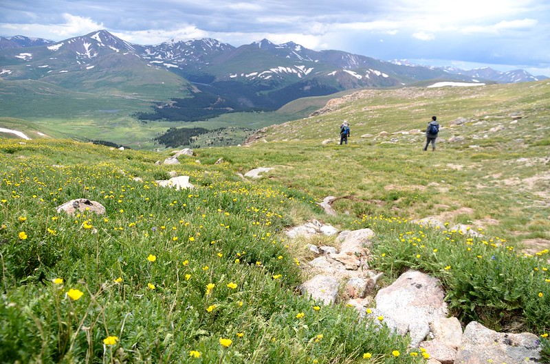 Tundra flowers along the trail up to Mount Evans (31)