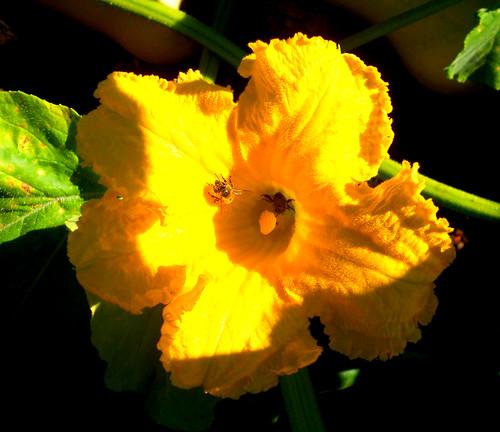 fleur du Potimarron et les visiteurs