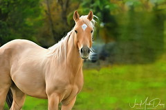 Kenansville Blondie
