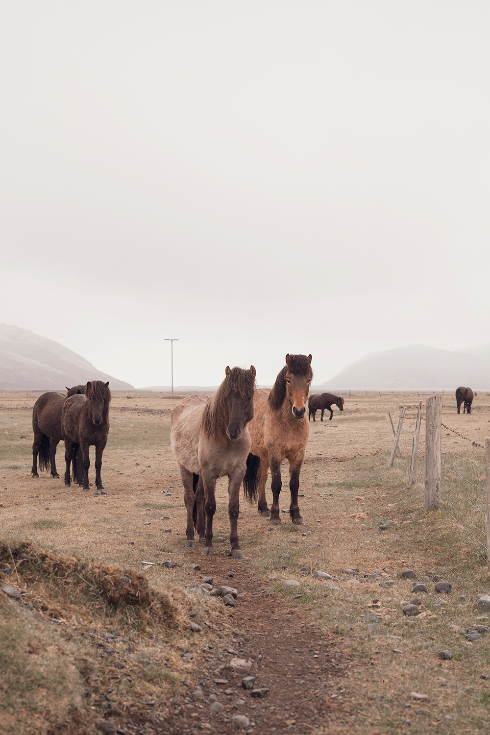 03iceland-hoffell-icelandichorses-horses-farm-travel