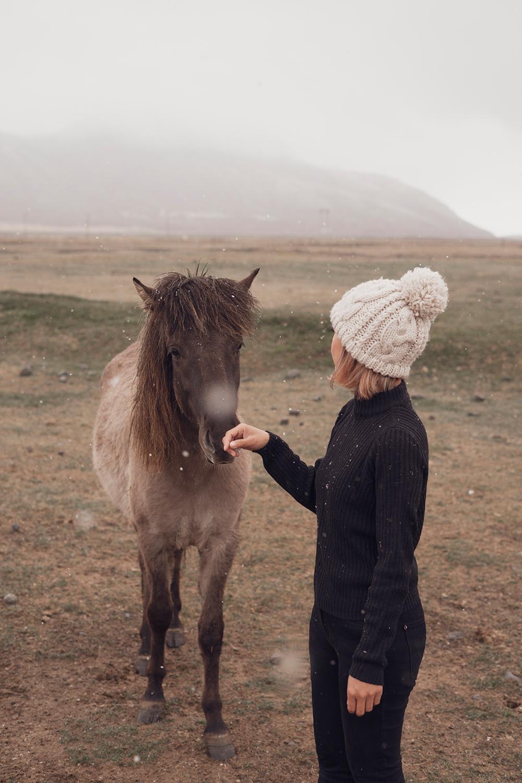 02iceland-hoffell-icelandichorses-horse-travel-style